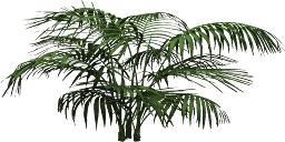 Mgtxd palm.png