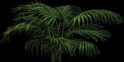 Mgtxd palm amdtc.png