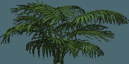 Mgtxd palm pal4.png