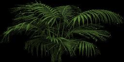 Mgtxd palm 1555.png