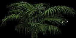 Mgtxd palm dxt3.png